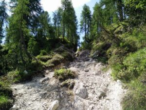 Cima del Cacciatore - The trail goes through sparse woods