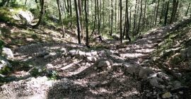 Skuta Trail – The path ascends through woods