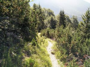 Vogel Trail – The path