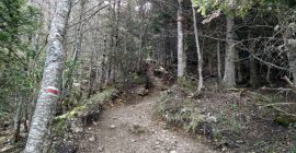 Moucherotte Trail – Narrow path
