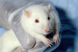 The adverse health effects of PFCs have mostly been studied in animals